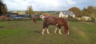 Secluded farm, 67 acres, equestrian or r...