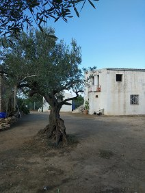 Spain finca  with equestrian OCA Rega nu...