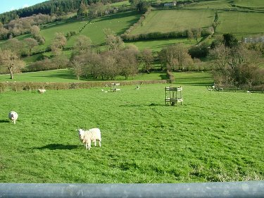Land for sale - 2 acre paddock.