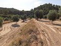 20000m2 land with olive trees in full pr...