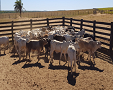 Productive farms for sale. Large areas f...