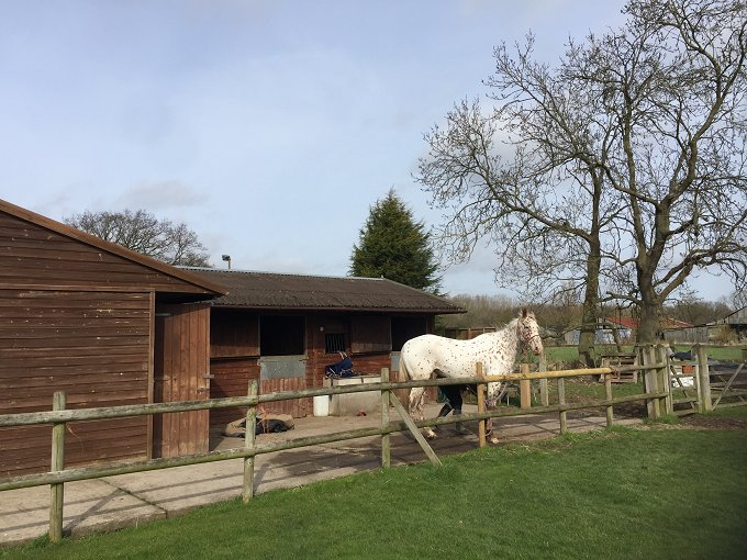 Delightful Country Equestrian Property
